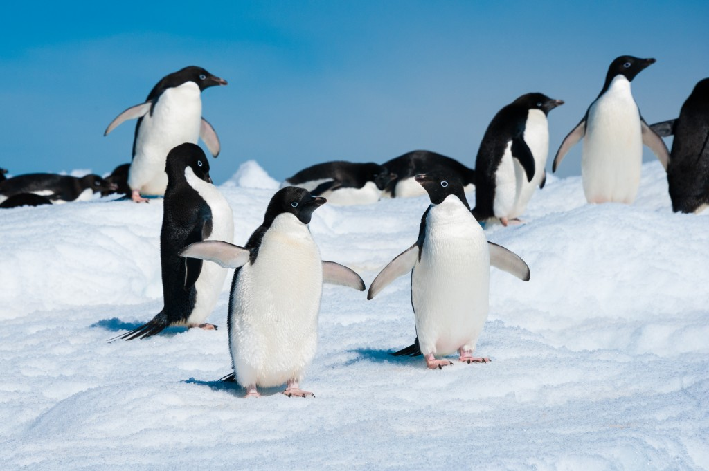 Penguins on Antarctica.
