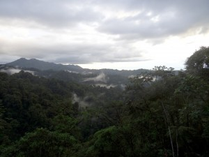 Ecuador's Cloud Forest