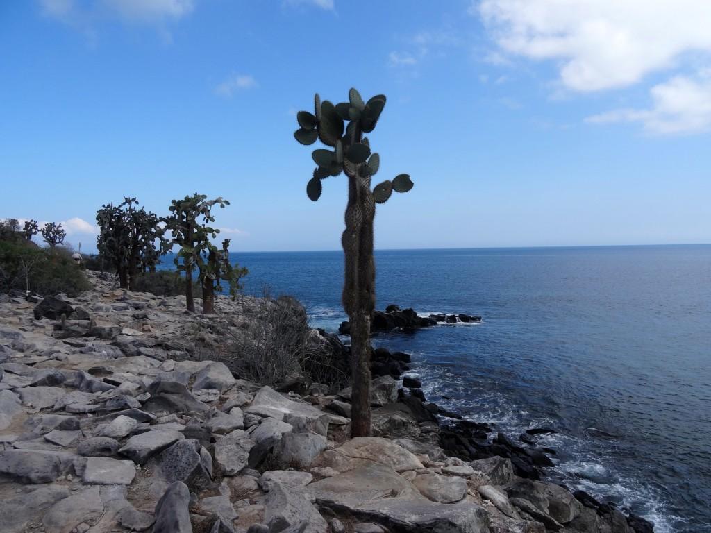 14_PRICKLY-PEAR-SANTA-FE_Galapagos