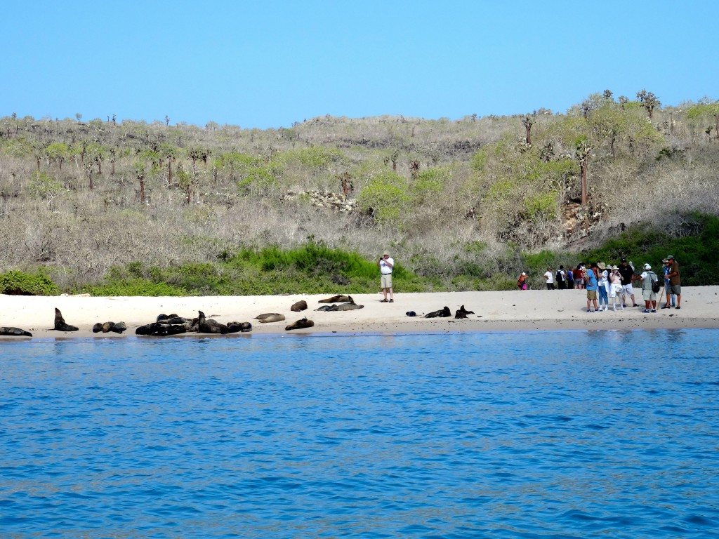 20_SEA-LION-SHORE_Galapagos