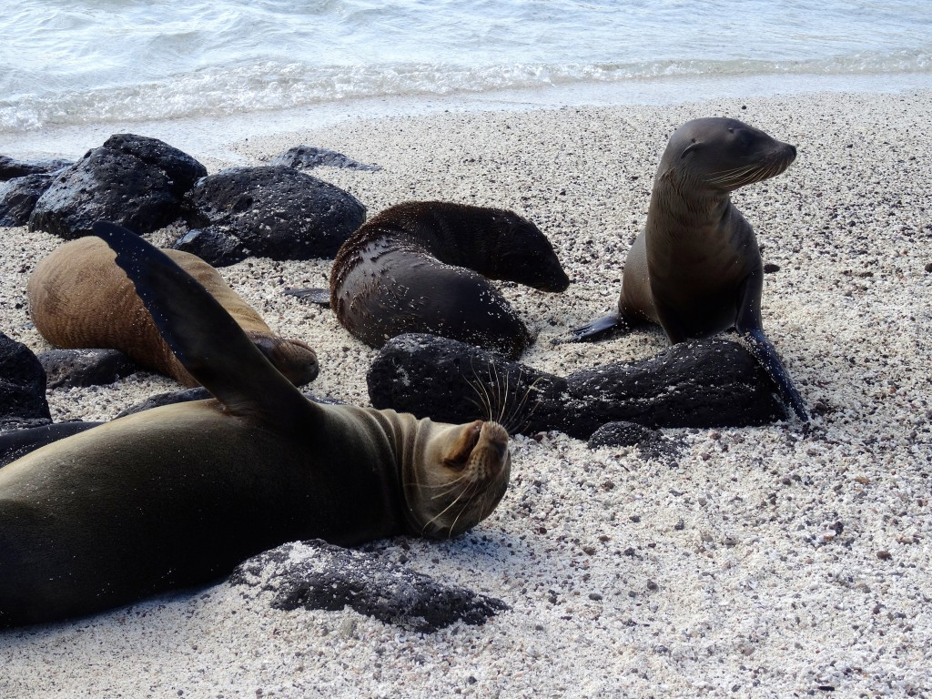 22_SEA-LION-PUPS_Galapagos