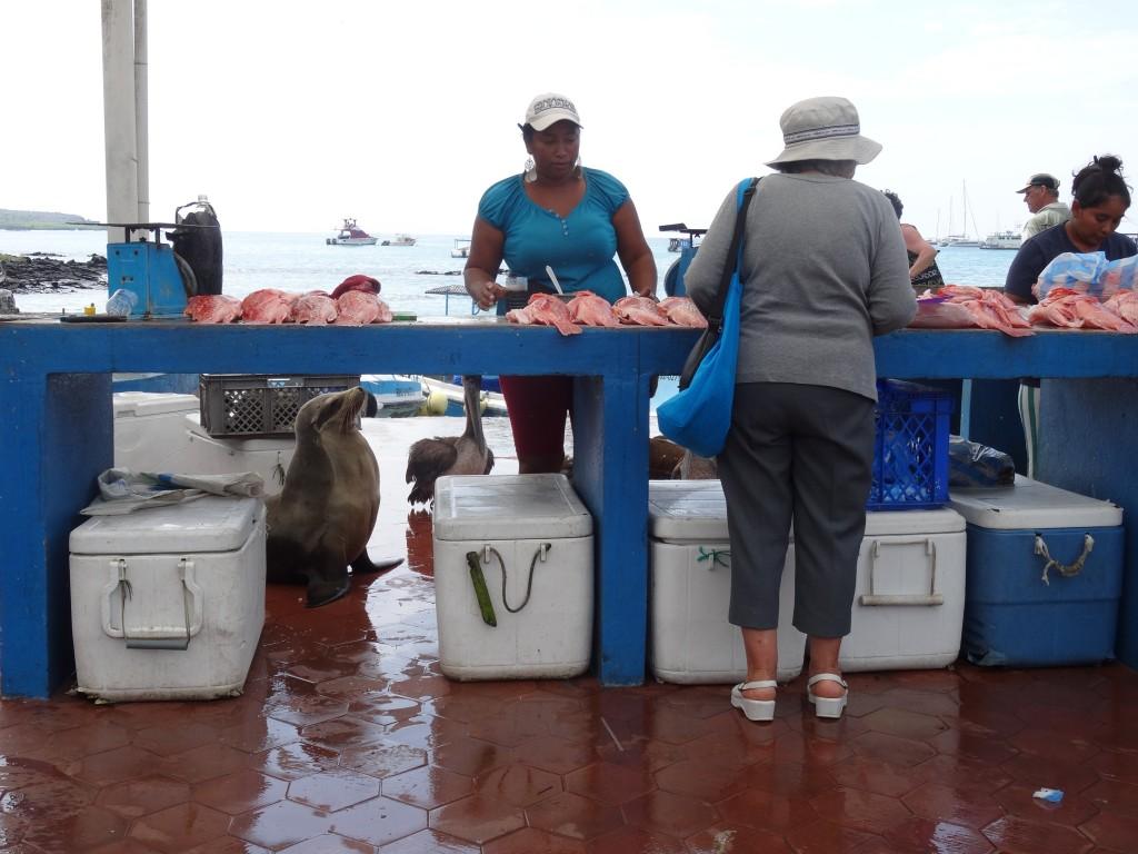 33_FISH MARKET PUERTO AYORA_Galapagos