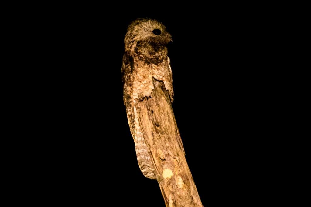 Owl-1410
