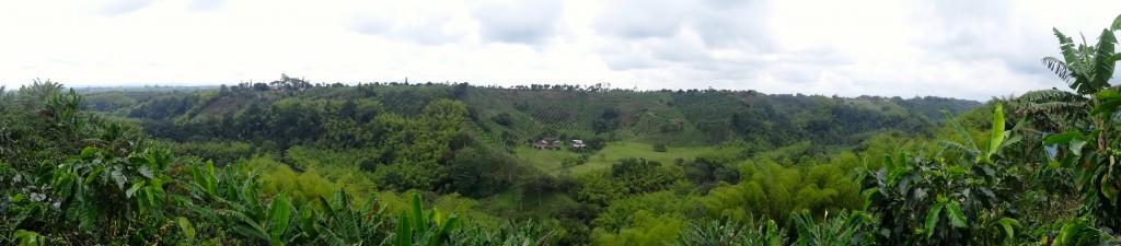 15_COFFEE-FARM-PANO_Colombia