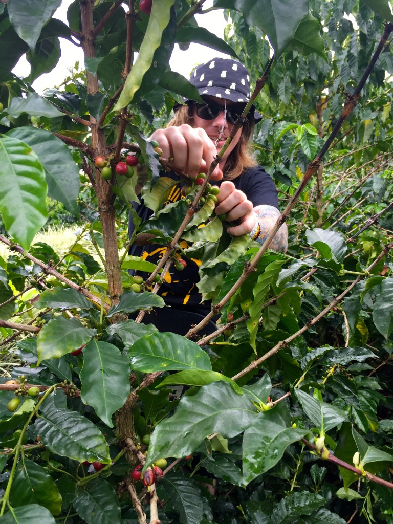 16_PICKING-COFFEE-BEANS_Colombia