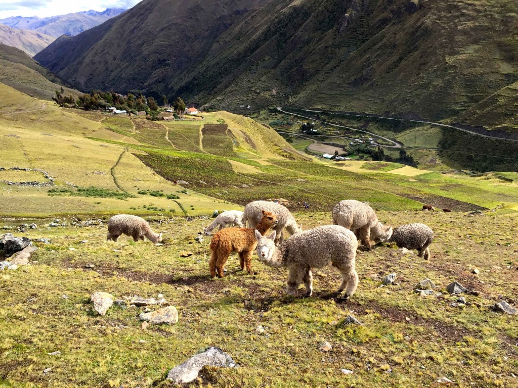 PATACANCHA on the Lares Trail.