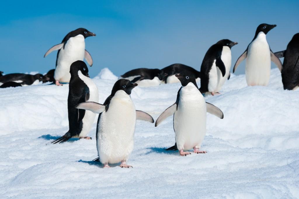 Expectations of Antarctica