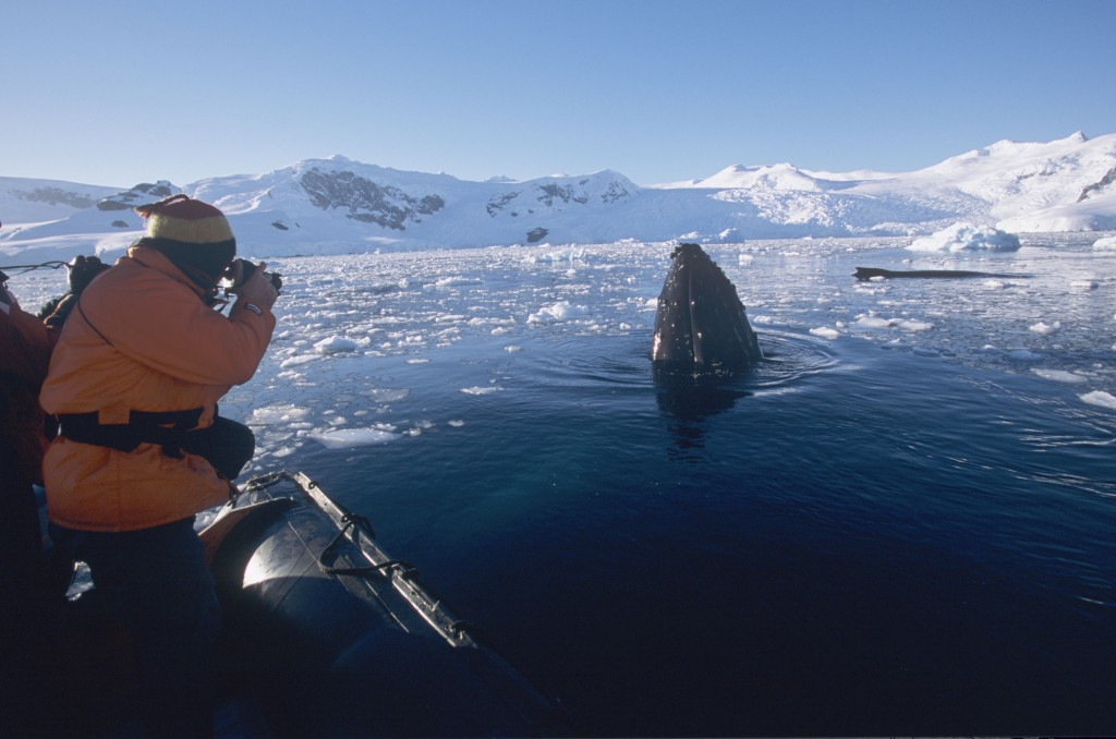 Antarctica_Wildlife_Whale&PAX