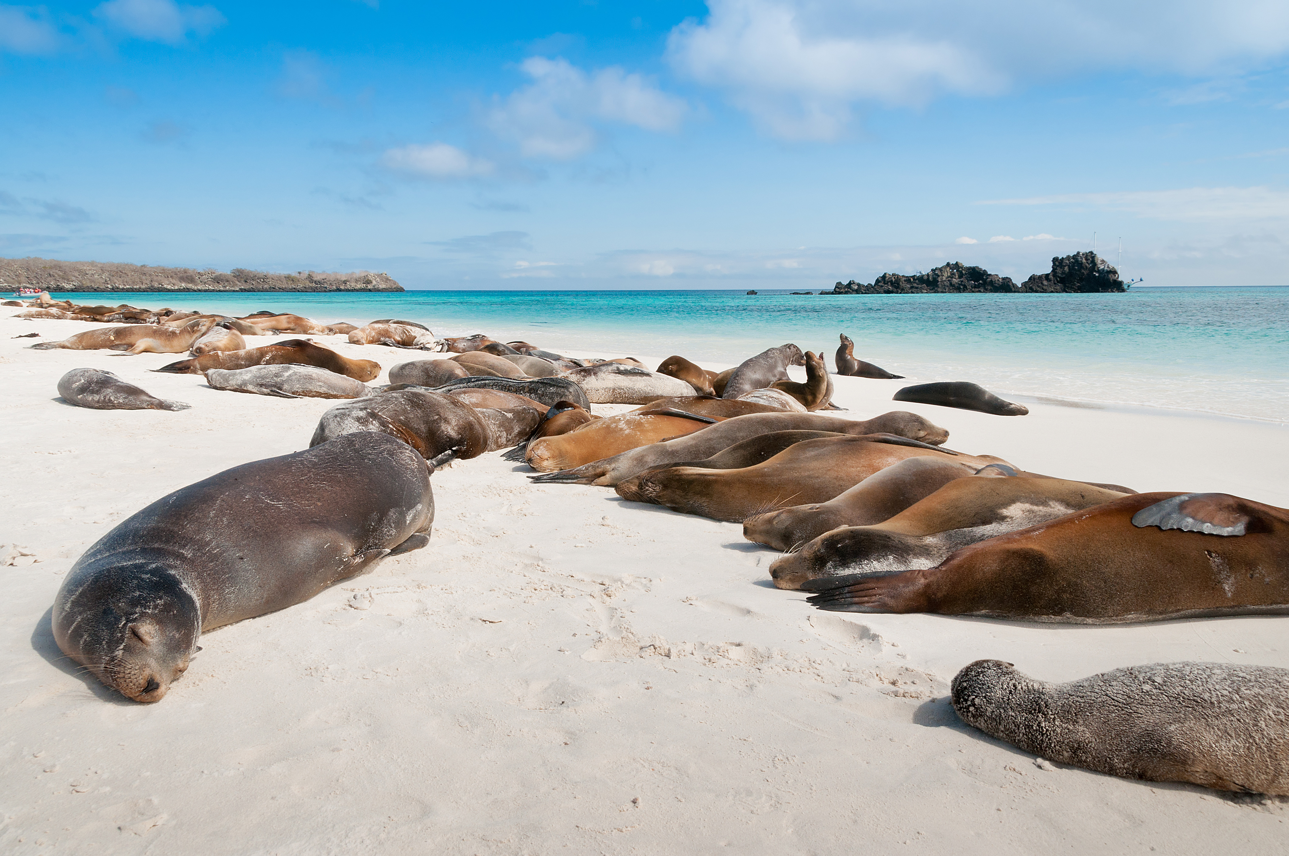 Galapagos Cruise Or Island Stay Chimu Adventures Blog