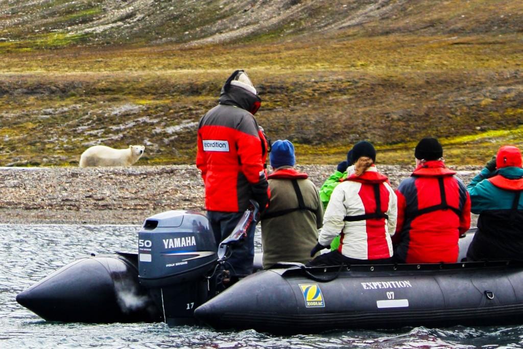 Travellers in a zodiac seeing a polar bear