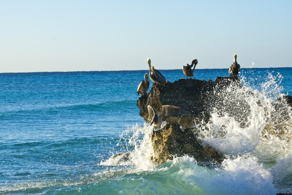 pelicans sitting on a rock st 12