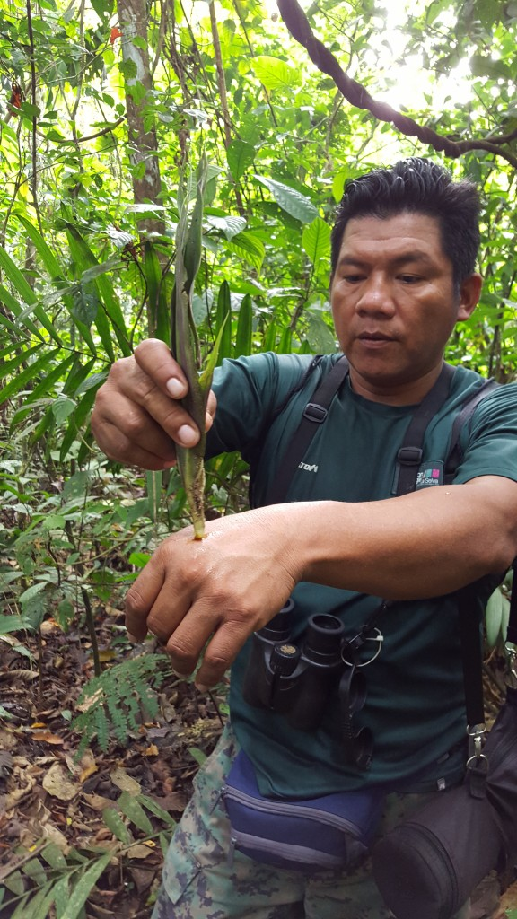 Rodrigo in the Amazon
