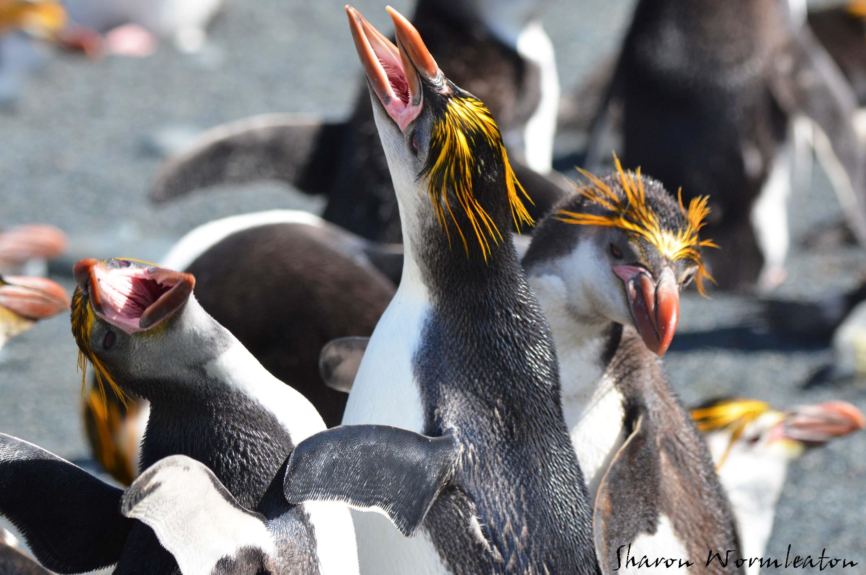 Disturbing Friday Fun: Penguin Batter - 2019 year