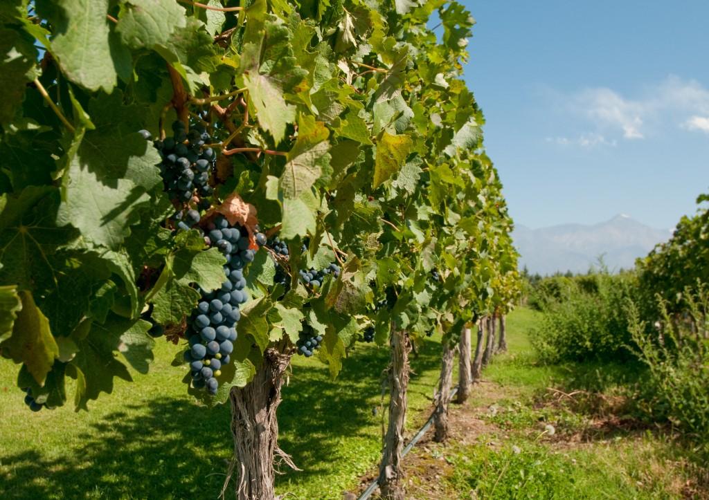 wine regions - Mendoza