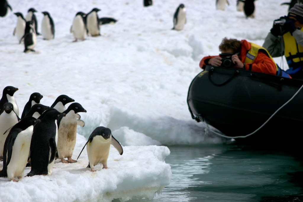 person on zodiac boat taking pictures of penguins