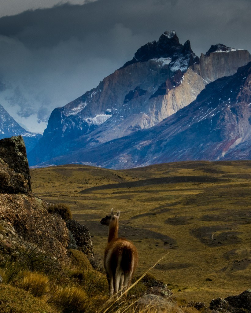 Wildlife of Patagonia, Chile