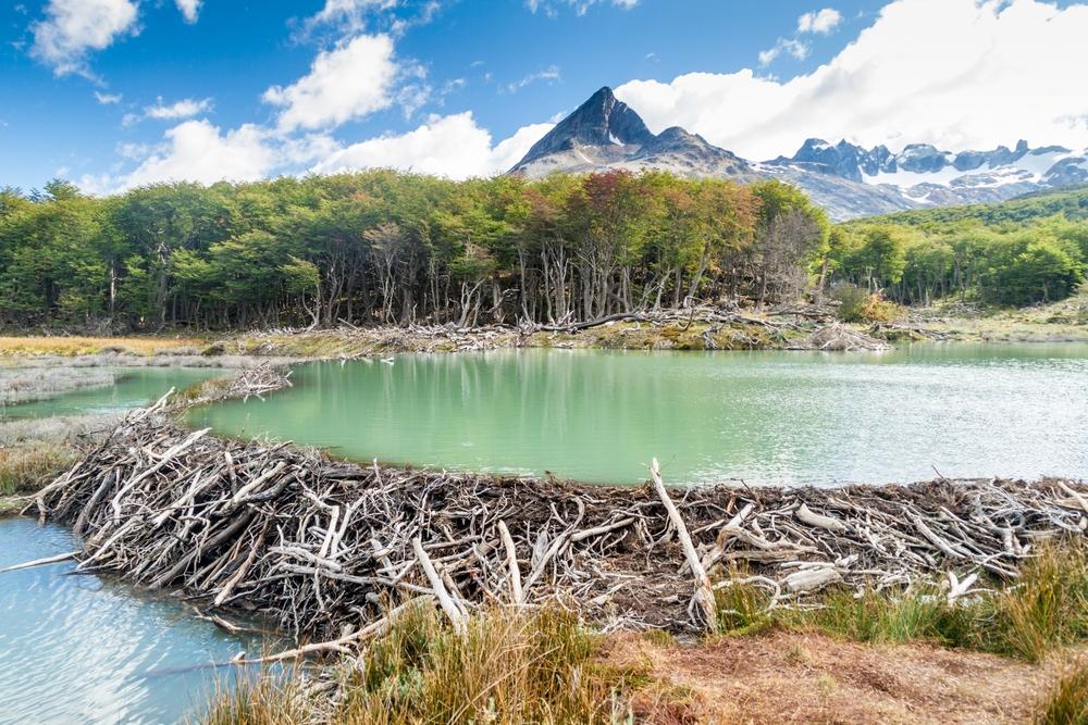Tierra Del Fuego near Ushuaia in Argentina