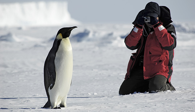 A friendly encounter with a King Penguin in Antarctica