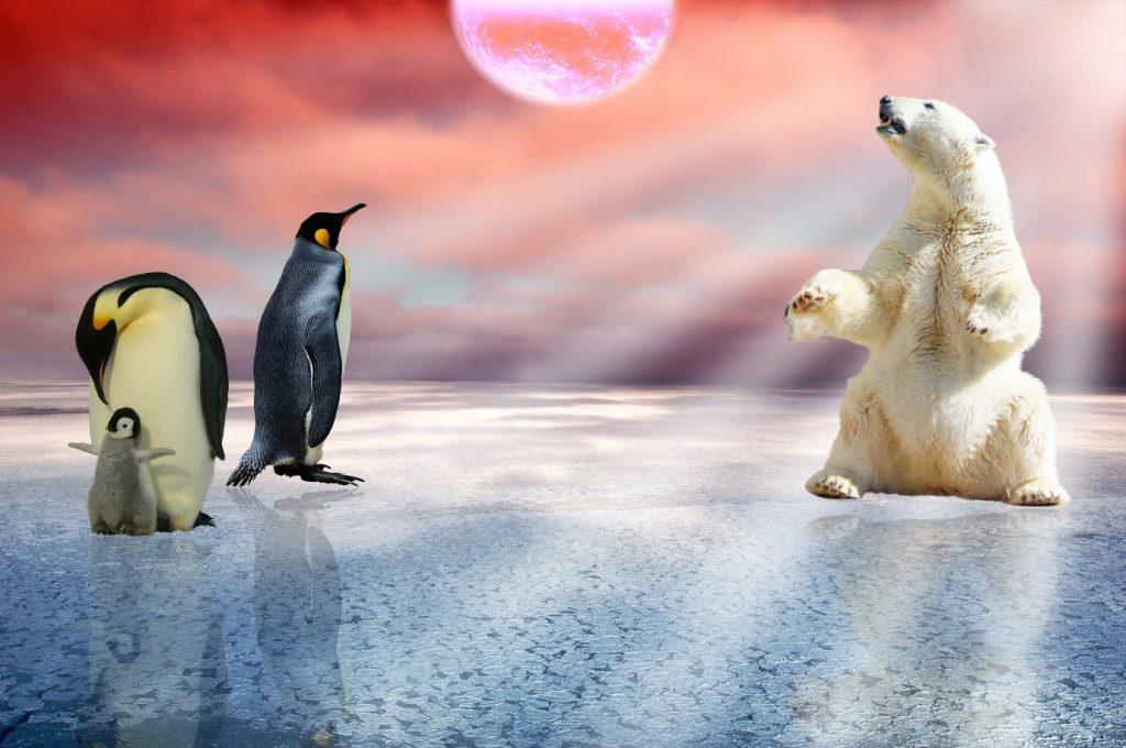 Polar Bears Exist in Antarctica: Penguins and polar bear on ice