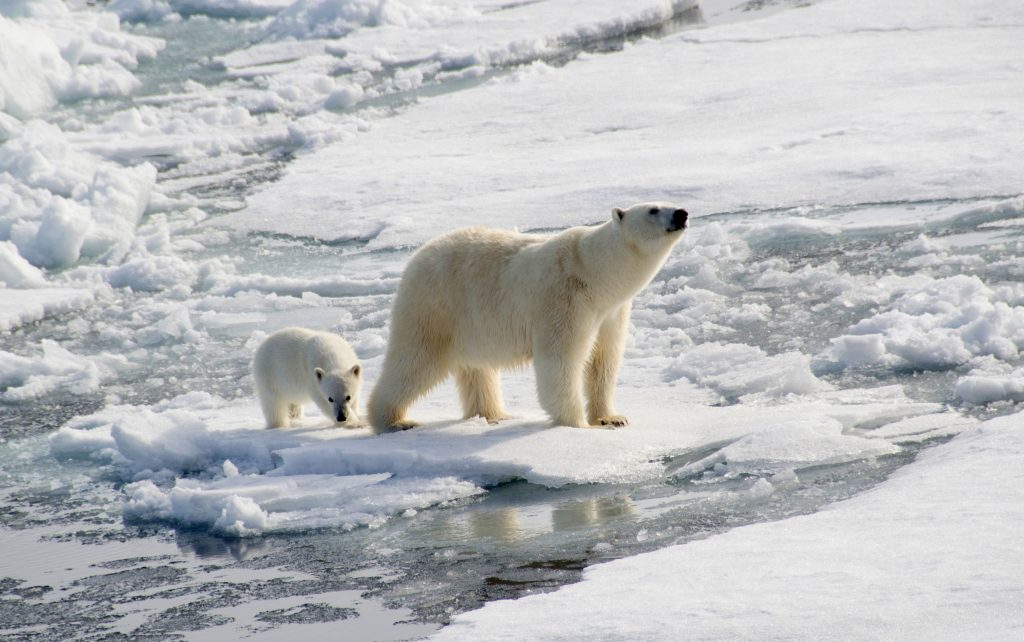 Antarctica Facts: No polar bears in Antarctica