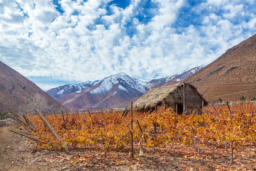 Vineyard in the Elqui Valley for pisco production with Andes mountains in the background in Chile