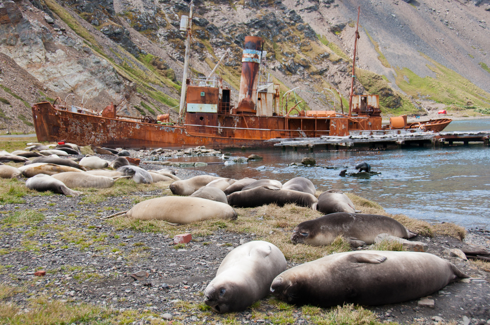rusty shipwreck seals on beach antarctica