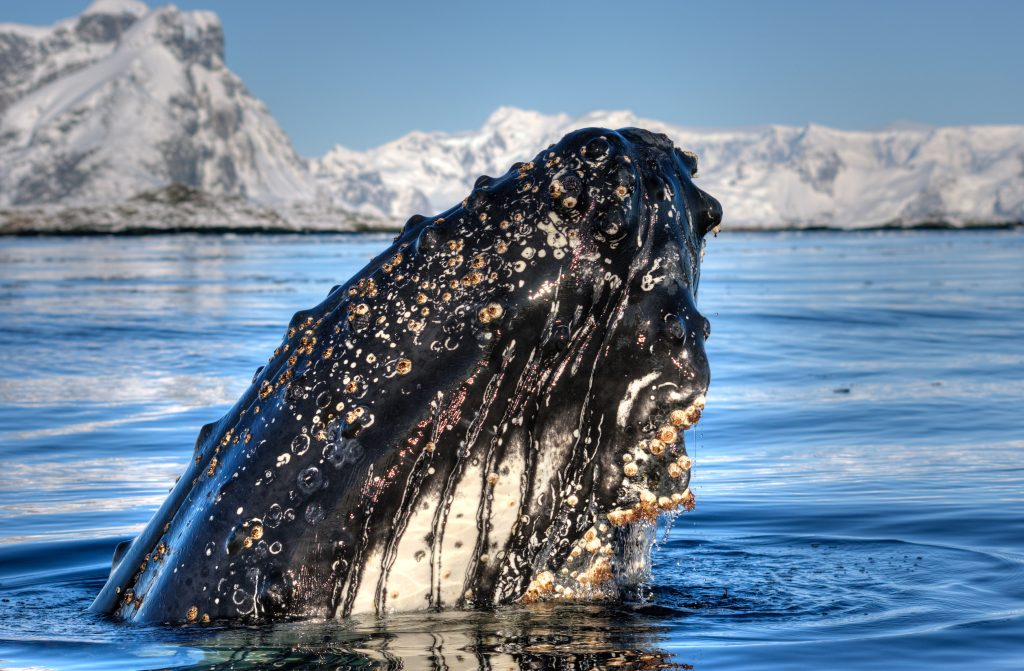 Antarctic wildlife from plankton to whales for Can i visit antarctica
