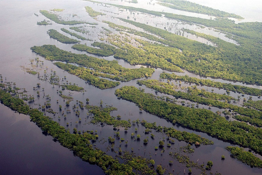 flooded fields in the amazon