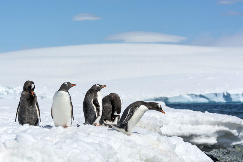 penguins on the mainland of antarctica on the snow