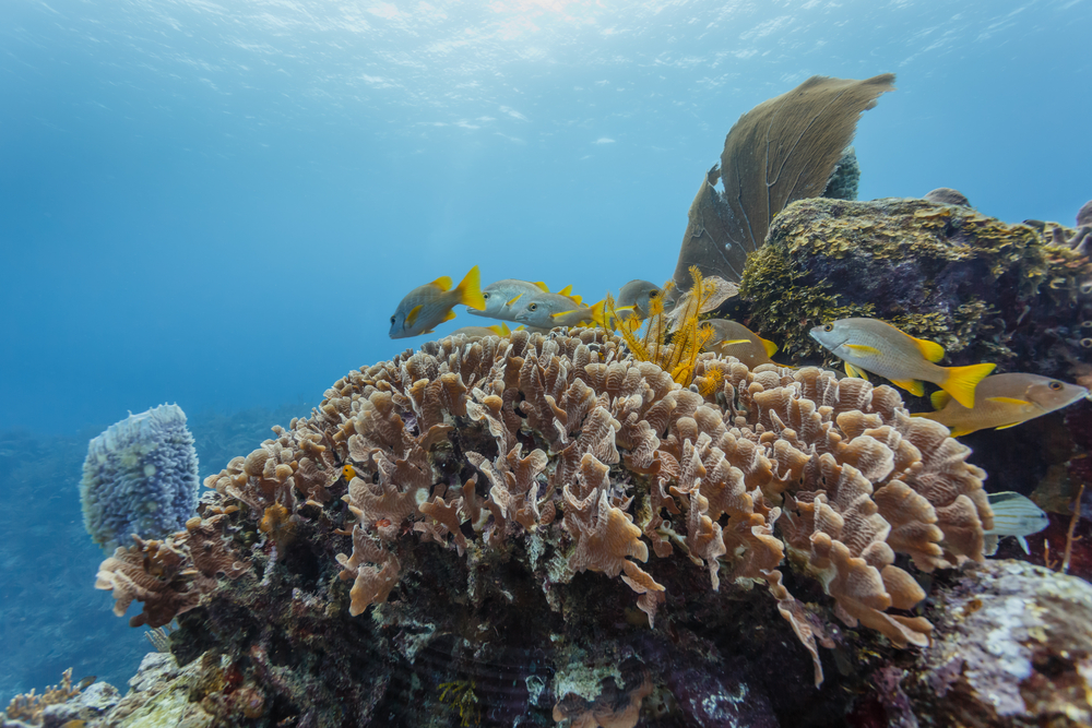 underwater picture of coral and colourful fish