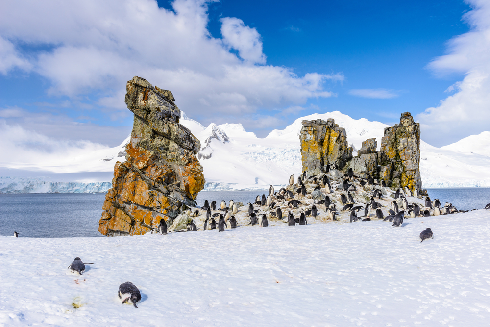 penguin colony in snow in front of a big rock