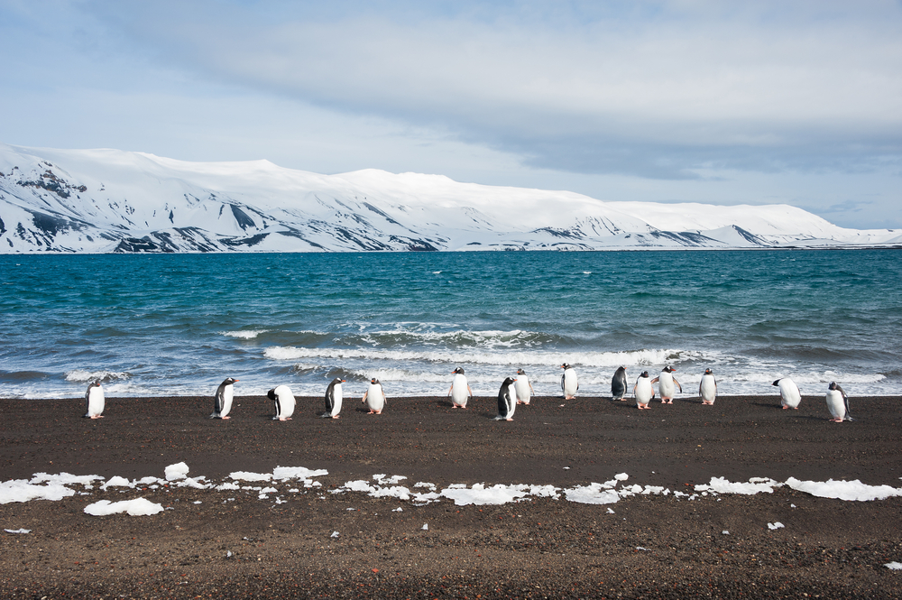 penguins walking on the beach with snow capped mountains in the background