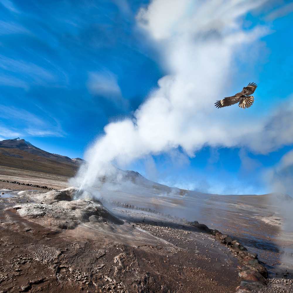 Condor flying over geiser in desert with blue sky