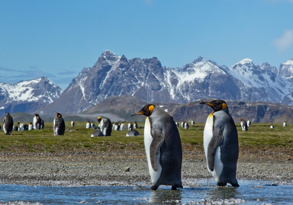 Penguins with mountains no the background