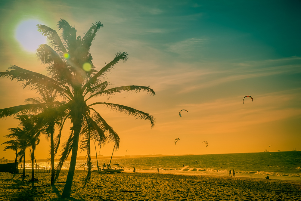 beach with orange sunlight and palm trees