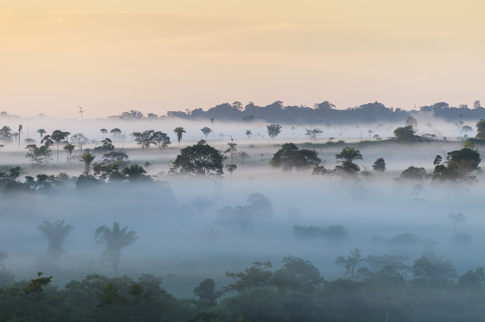 trees with fog amazon brazil