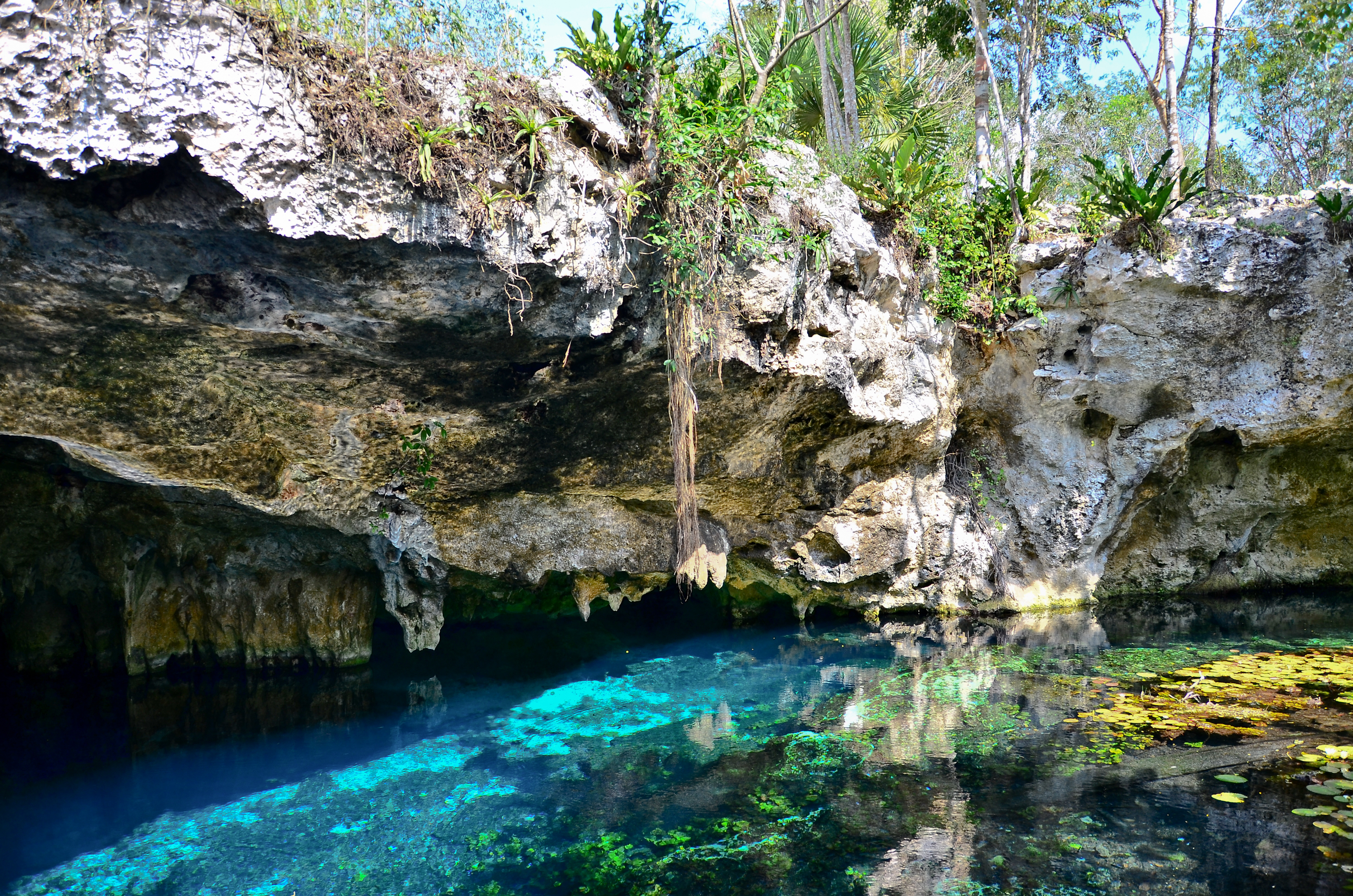 blue water lagoon in forest tulum