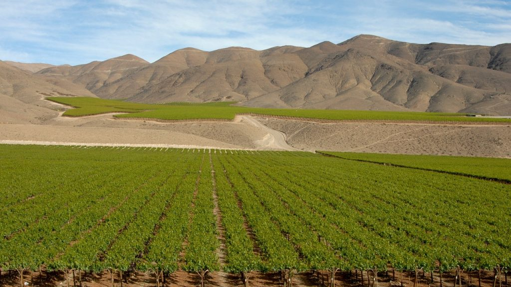 Maipo Valley, vineyard with mountains in background in chile