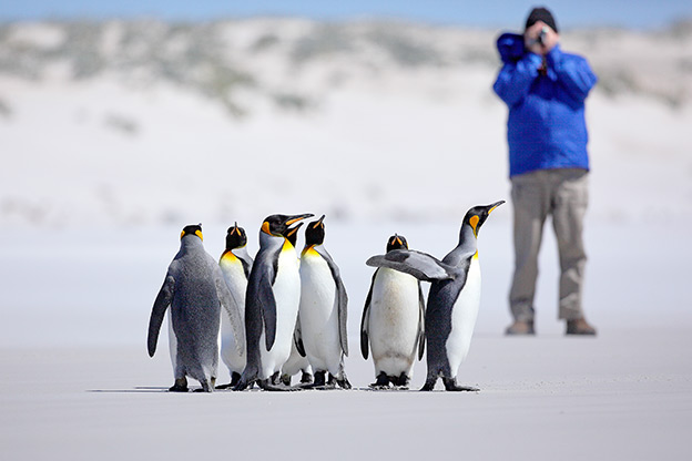 Antarctica Activities: Photographer taking a photo of a group of King penguins