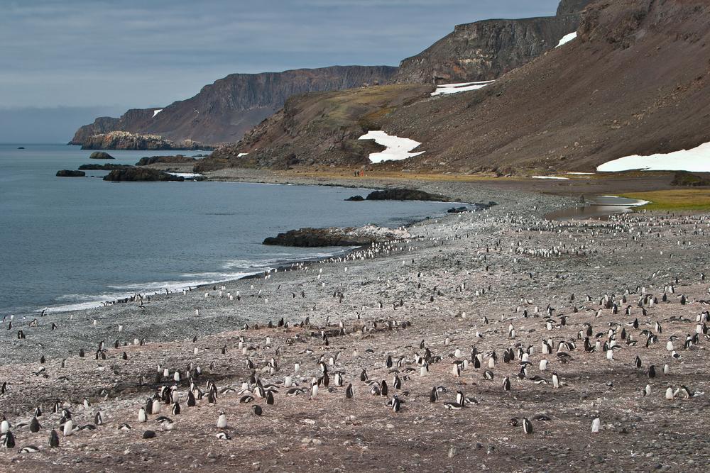 penguins on rocky beach south shetland