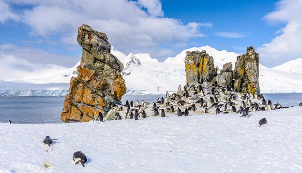 Penguins on South Shetland Islands. Photo credit: Shutterstock.