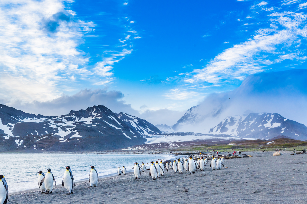 penguins marching next to a lake with snow capped mountains in the background