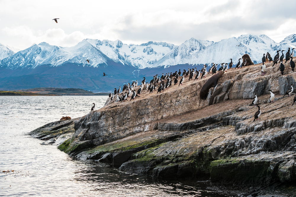 penguins on a rock in Chile in tierra del fuego
