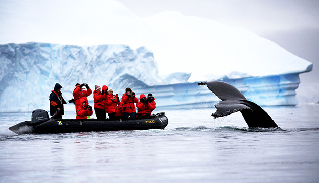 A zodiac filled with people look on as a whale's tail emerges from the water.