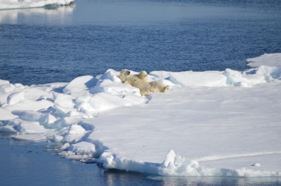polar bear laying on an ice shelf