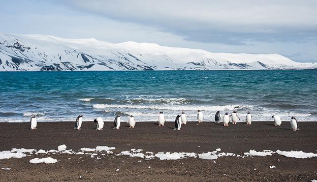 Penguins on Deception Island.