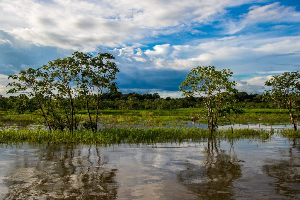 Amazon scenery in Ecuado