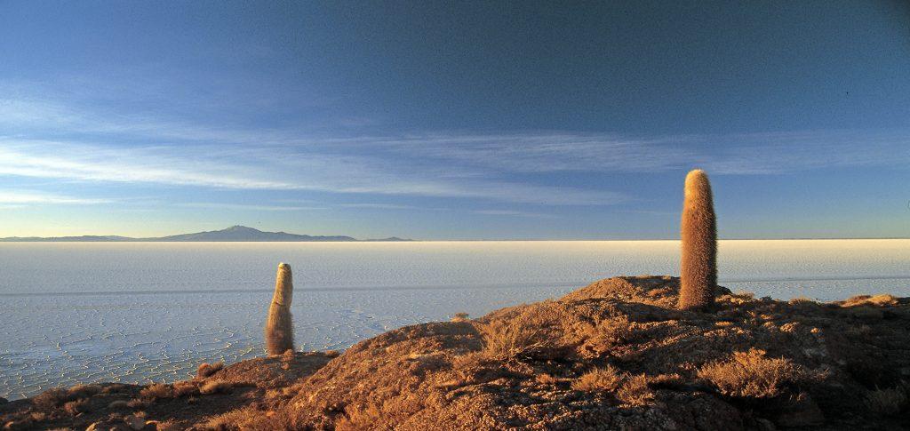 Cactus Island at the Uyuni Salt Flats in Bolivia
