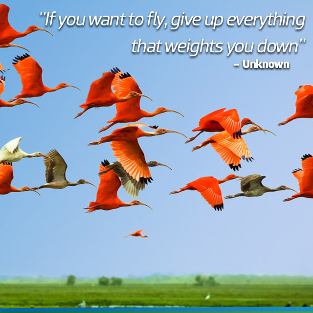 Travel Quote: If you fly, give up everything that weights you down - Unknown.