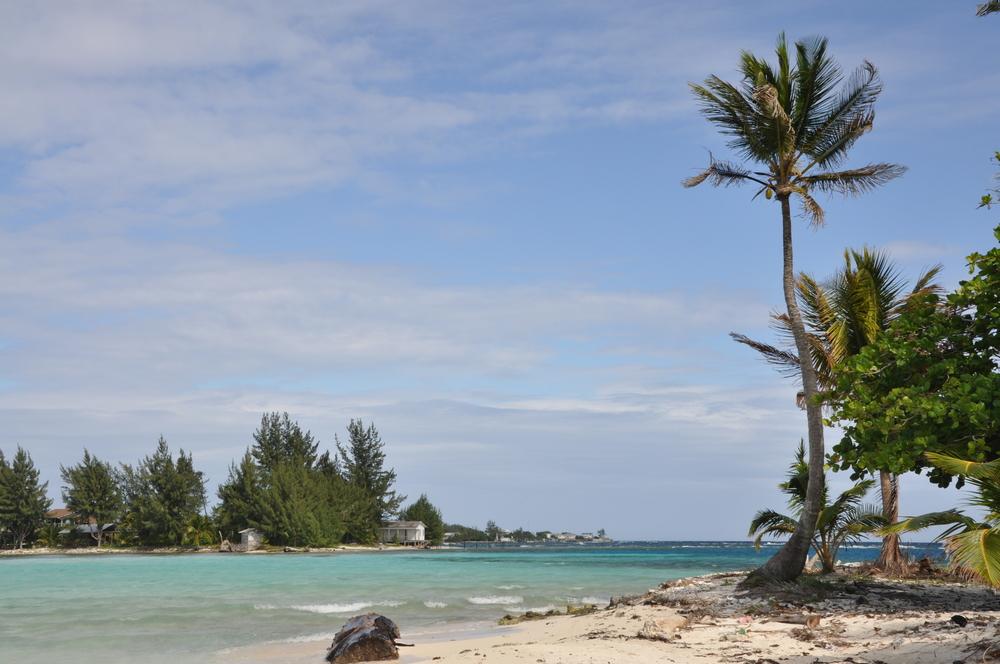 island utila honduras with palm trees